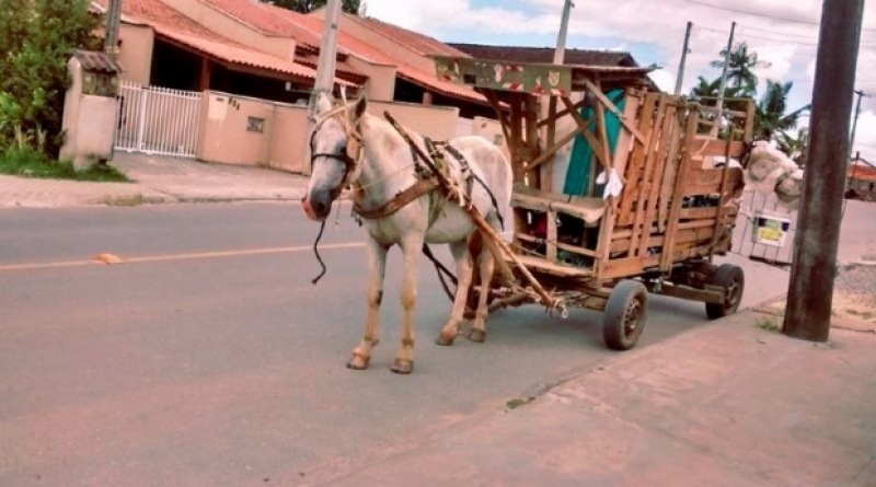 Veículos puxados por animais são proibidos de circular em Cuiabá