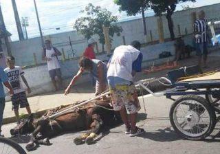 Cavalo que teria desmaiado por exaustão no dia 19 de janeiro de 2019. Divulgação/MP