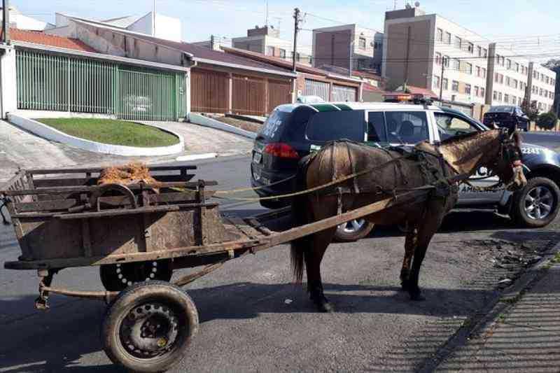 Prefeitura de Matão sanciona lei que proíbe uso de animais para condução de carga no município — Foto: Prefeitura de Curitiba/Divulgação