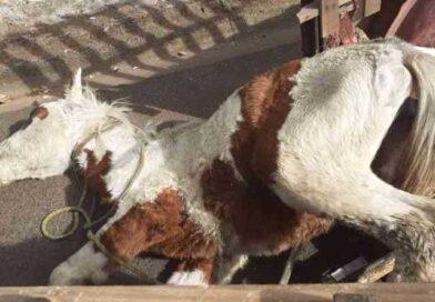Homem foi preso em flagrante por maus tratos a cavalo, em Matão — Foto: Divulgação/Guarda Civil Municipal de Matão
