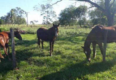 Animais de grande porte ganham novos lares, mesmo em tempos de pandemia em Bauru, SP